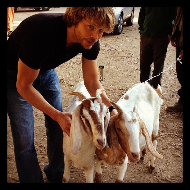 407_eco_eco_goats